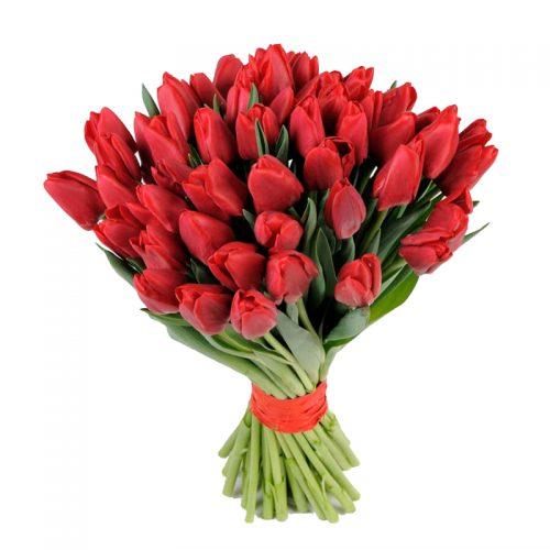 Фото товара 51 красный тюльпан