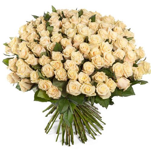 101 кремовая роза букет