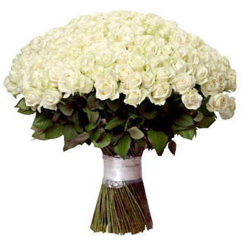 букет 201 белая роза фото