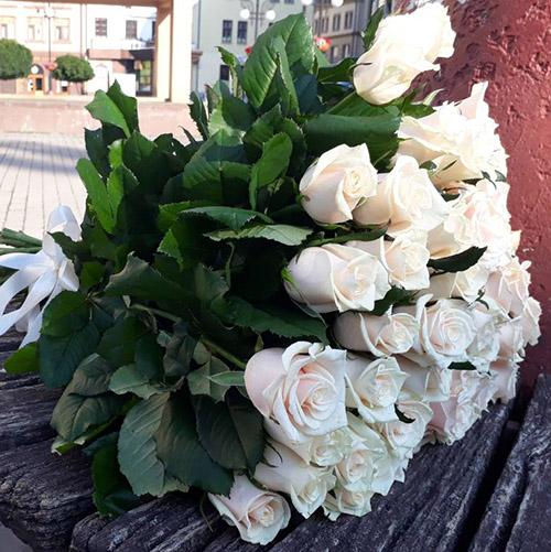 33 кремовые розы фото