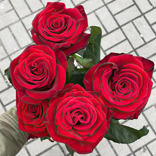 5 красных роз фото
