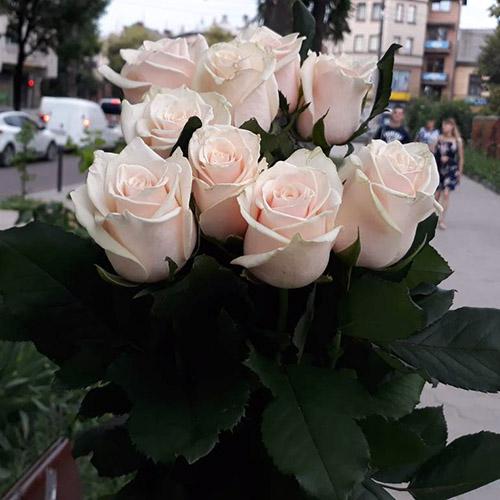 букет из 11 кремовых роз фото