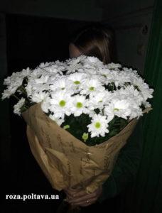 хризантемы полтава