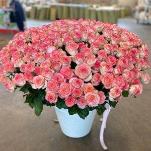 301 роза в Полтаве фото