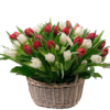 Фото товара 151 тюльпан в шляпной коробке