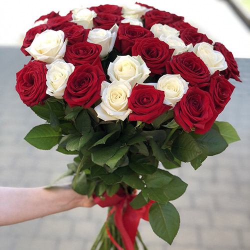 51 роза красная и белая в Полтаве фото