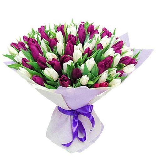 Фото товара 75 пурпурно-белых тюльпанов