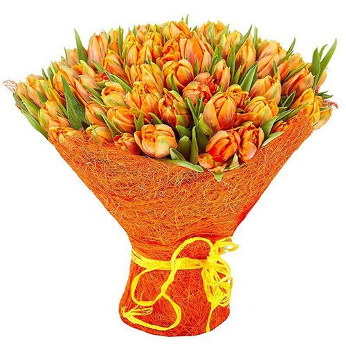 Фото товара 101 маковый тюльпан